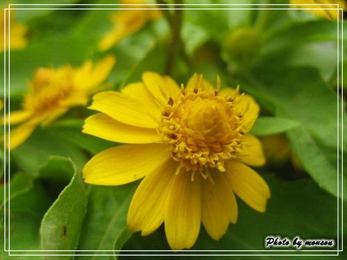 花市裡 美美的小花