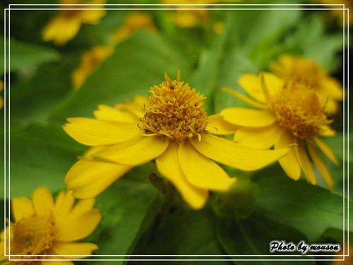 美美的小花+1