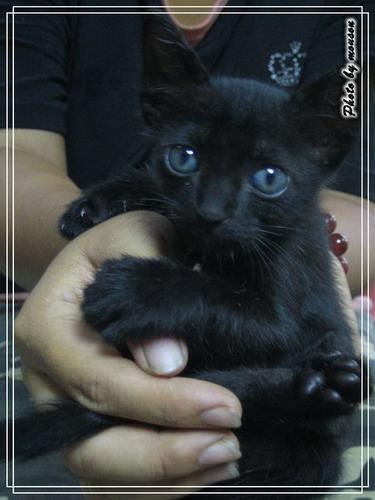有人要養小貓嗎? 歡迎認養唷!